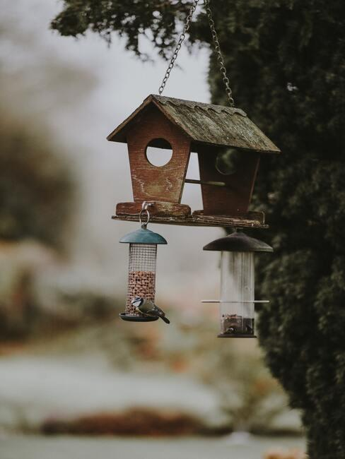karmnik dla ptaków DIY pełny ziaren i przysmaków