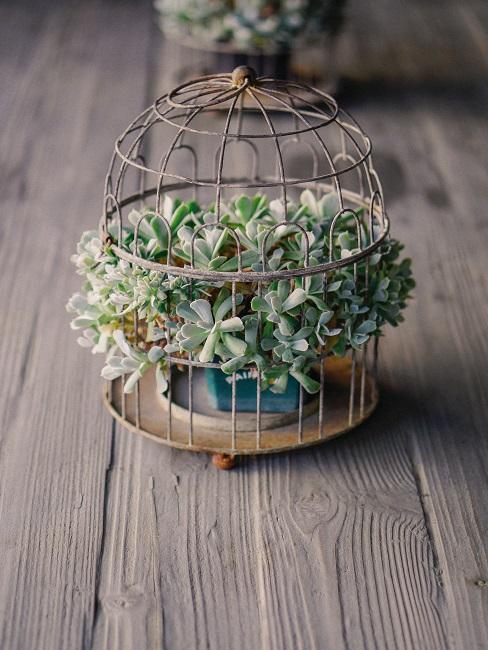 Piccola gabbia decorativa per uccelli con pianta succulente su un tavolo da pranzo di legno