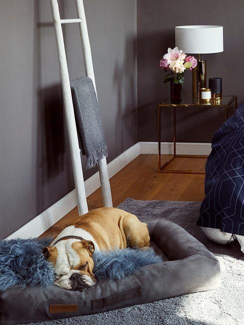 Eine weiße Holzleiter steht im Schlafzimmer an die Wand gelehnt mit einem Handtuch dekoriert.