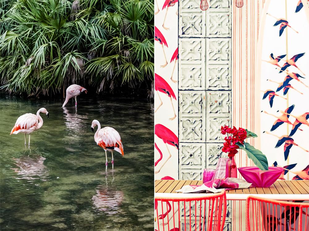 Trendbarometer Flamingo