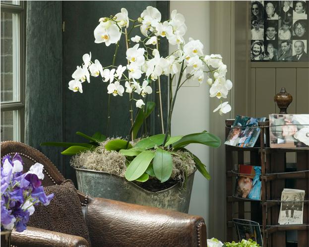 5 neue Look für Orchideen