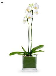 5 neue Looks für die Orchidee