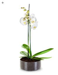 5 neue Looks für die Orchidee 2