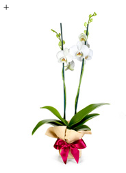 5 neue Looks für die Orchidee 3