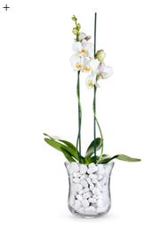 5 neue Looks für die Orchidee 4