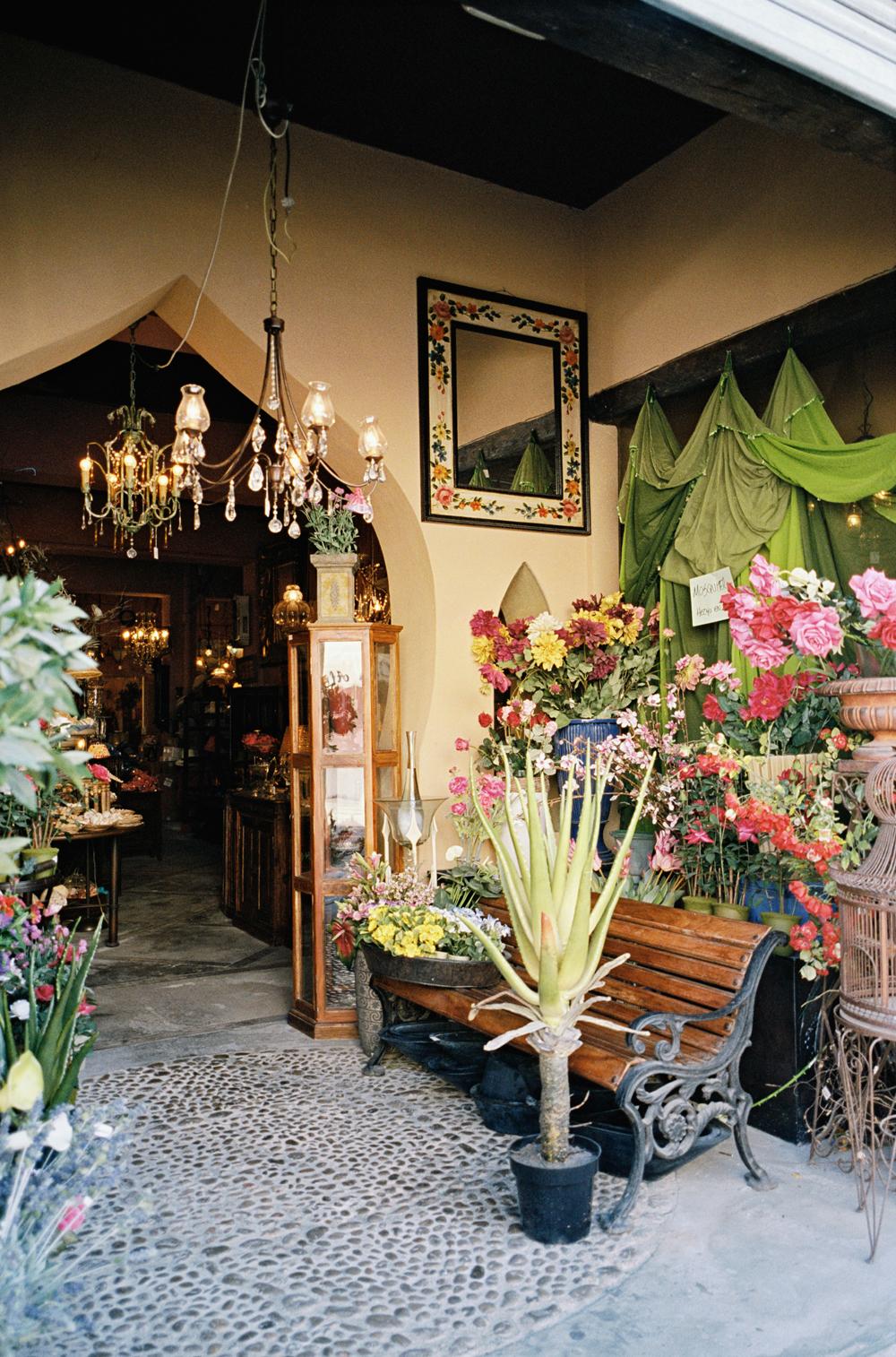Pflanzen Ibiza Blumen Garten Palme