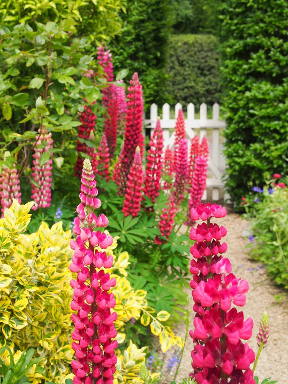 Blumen Garten Cottage