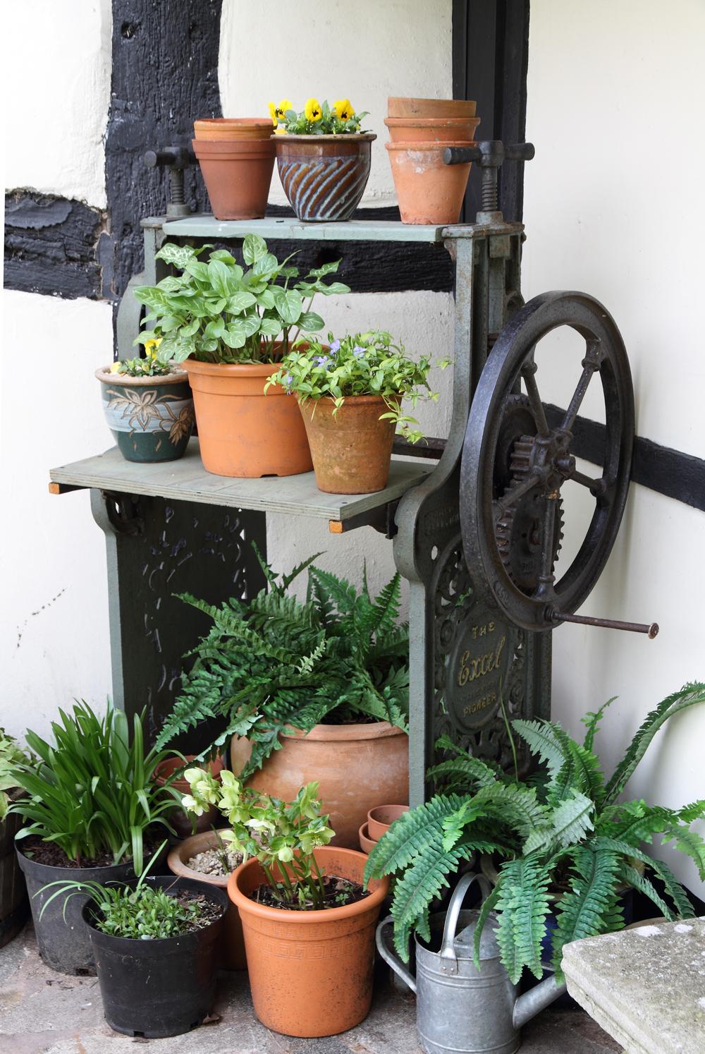Pflanzen im Garten Cottage