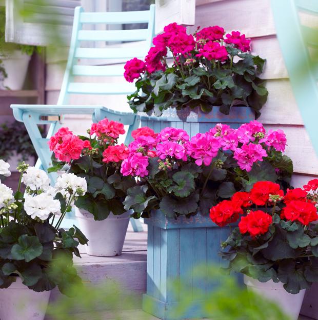 die sch nsten topfpflanzen finden sie jetzt bei westwing. Black Bedroom Furniture Sets. Home Design Ideas