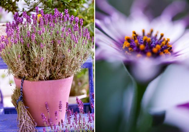 Die schönsten Topfpflanzen für den Balkon