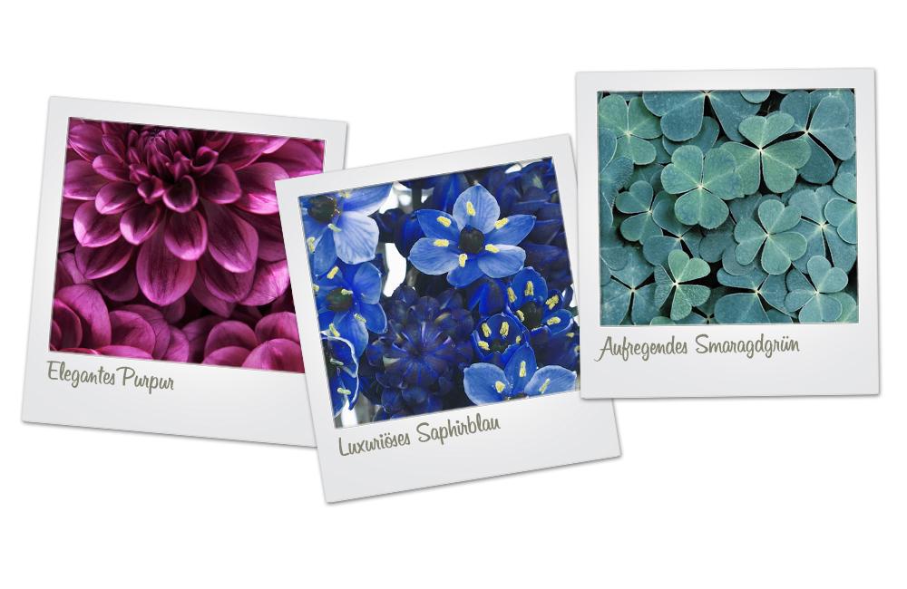 Juwelenfarben Blumen