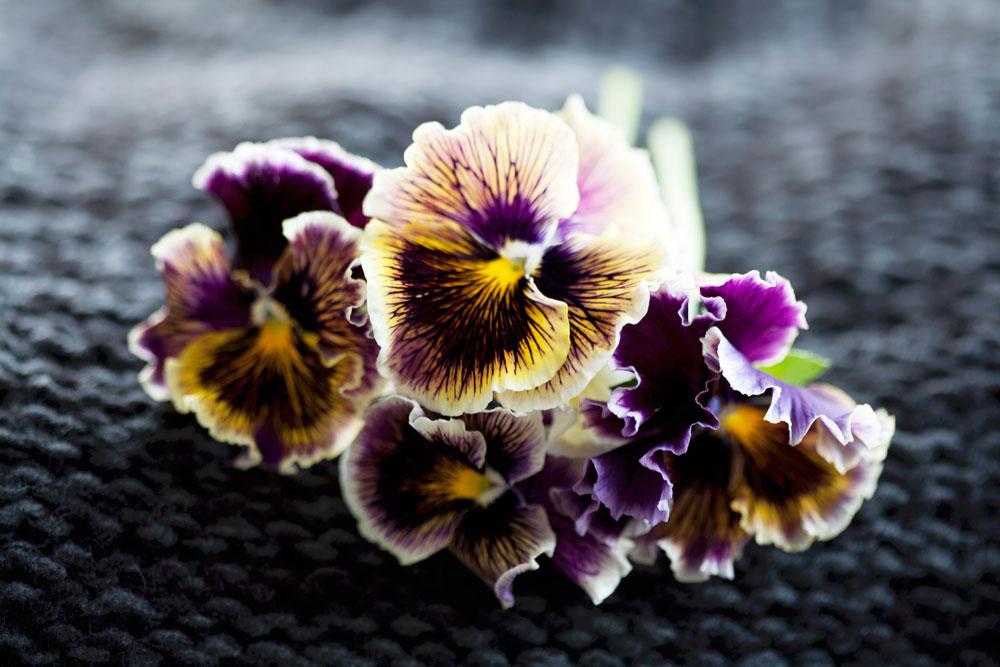 Inspiration Blumen