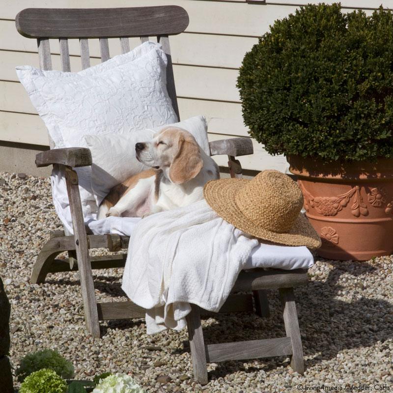 Hund Strohhut Liege
