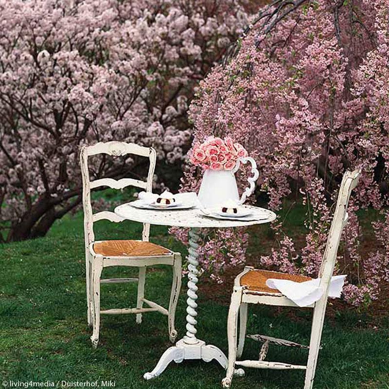 Kirschblütenzauber Instagram