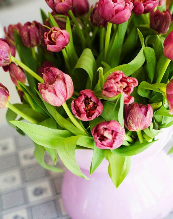 Küche Tulpen Familie