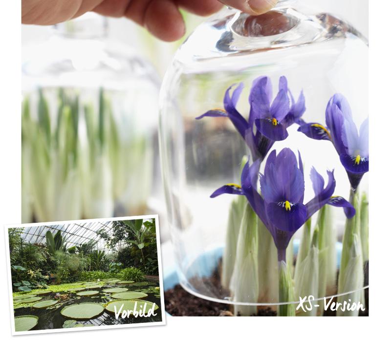 DIY IDEE: Süße XS-Gärten Westwing