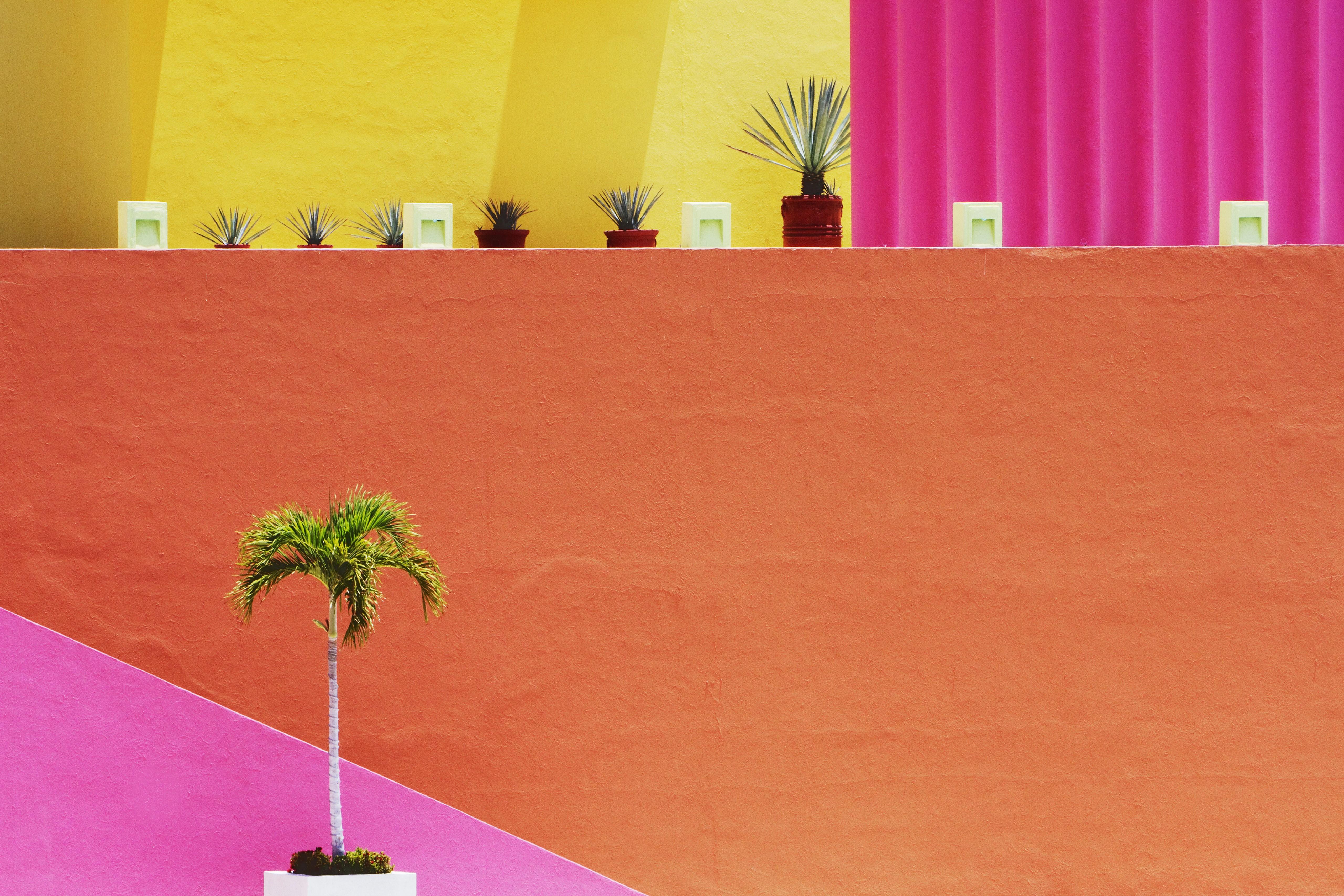 Was wir von frida kahlo lernen k nnen westwing magazin - Schaufenster dekorieren lernen ...