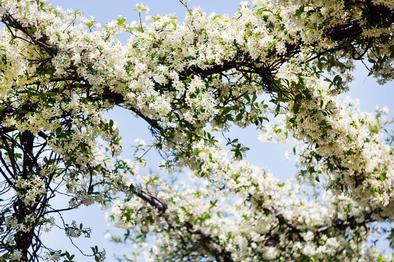 Margot Zanni Mailand Blumen