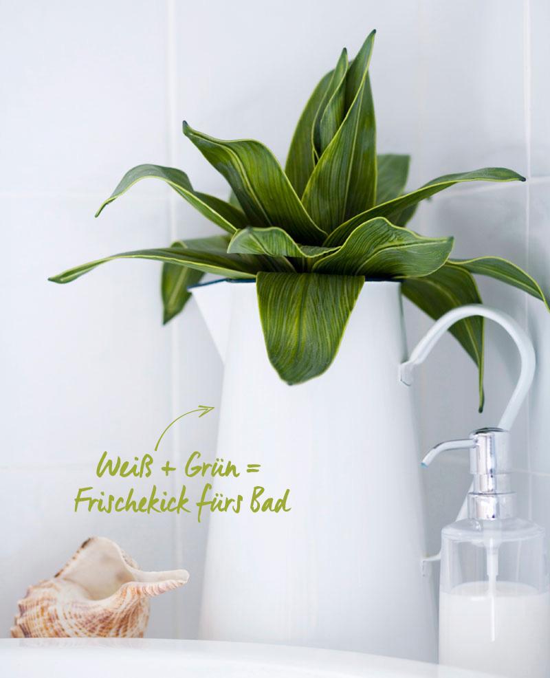 Minimalistische Botanik: Palmblätter und Farne