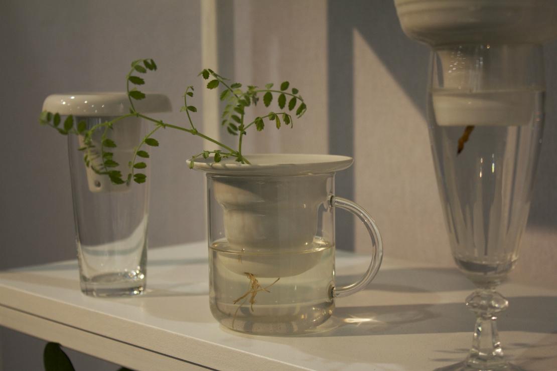 maison-objet-gruenpflanze-im-glas