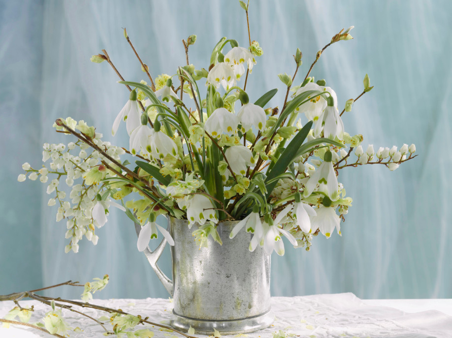 Snowdrops on table