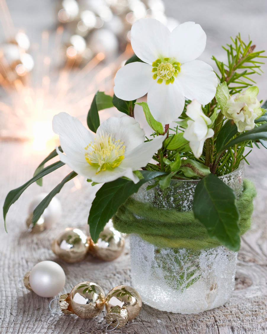 Christmas rose winter flowers in glass