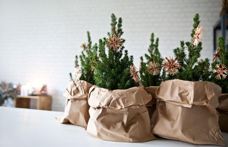 weihnachtsb ume f r kleine r ume westwing magazin. Black Bedroom Furniture Sets. Home Design Ideas