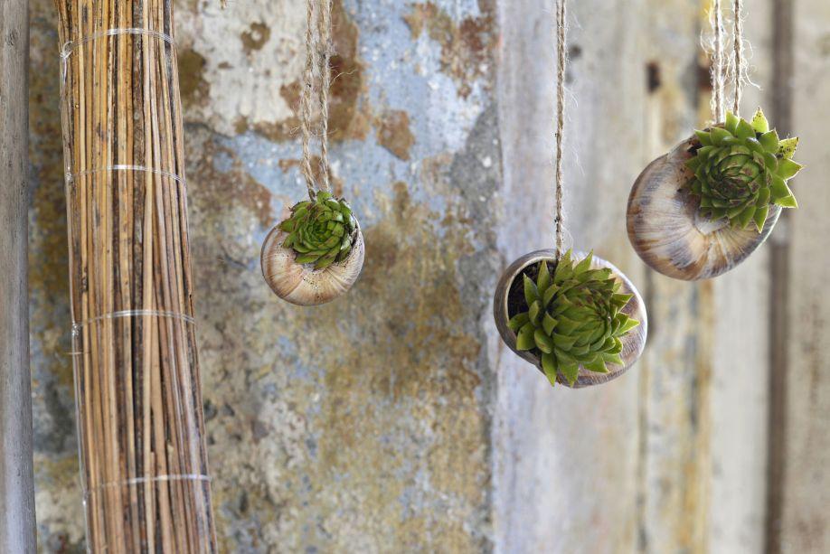 indoor pflanzen hängepflanzen