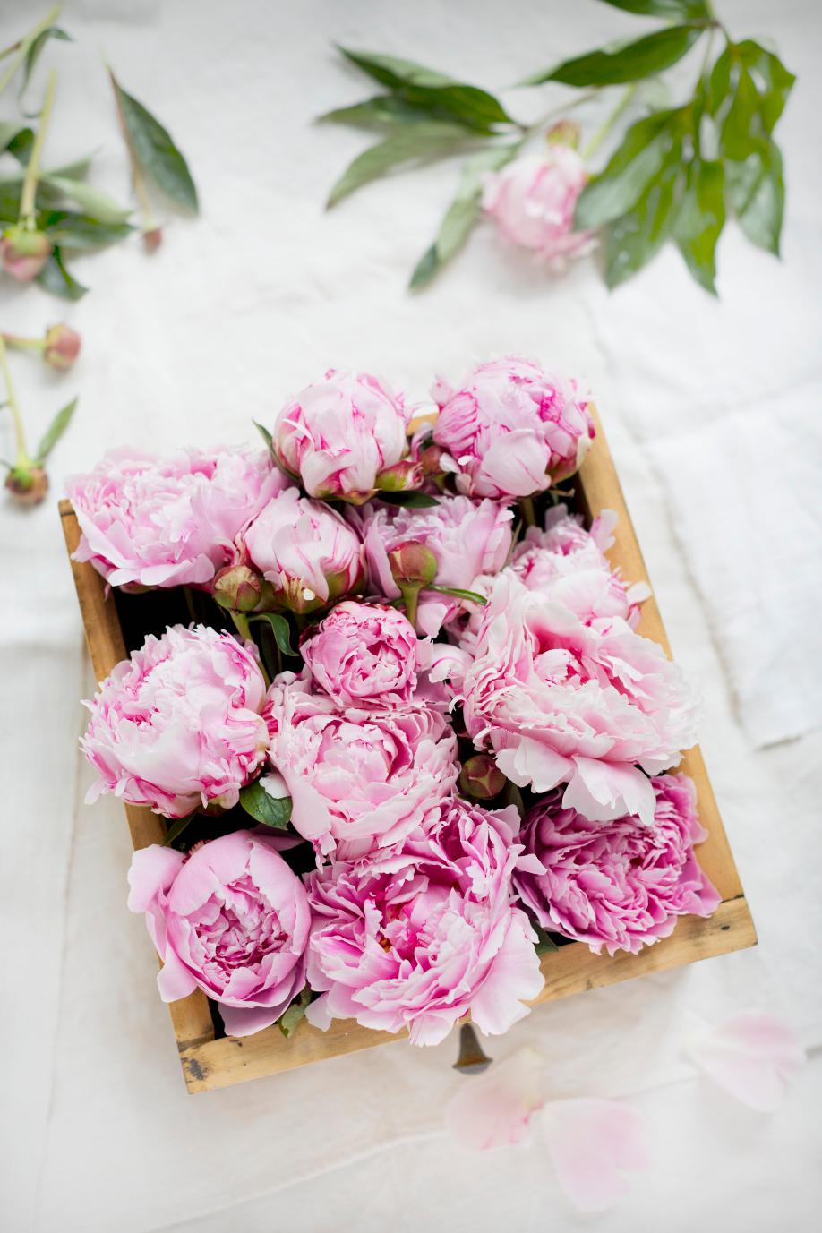 westwing-blumen-pfingstrosen-pink-weiß