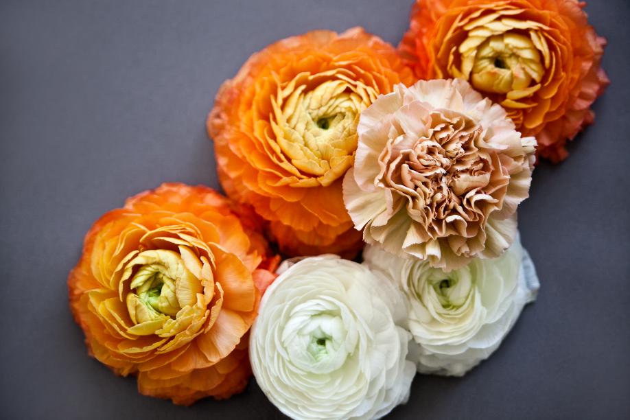 westwing-blumen-ranunkeln-orange-weiß
