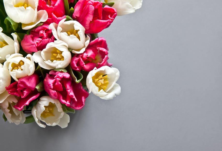 westwing-blumen-tulpen-pink-weiß
