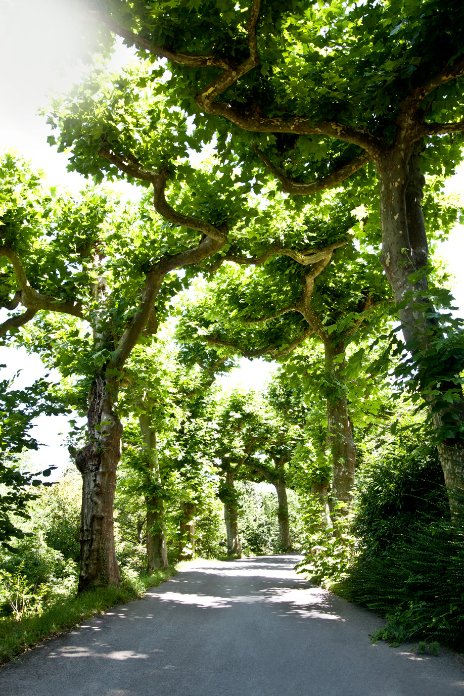 westwing-zuhause-bei-graefin-sandra-bernadotte-bäume