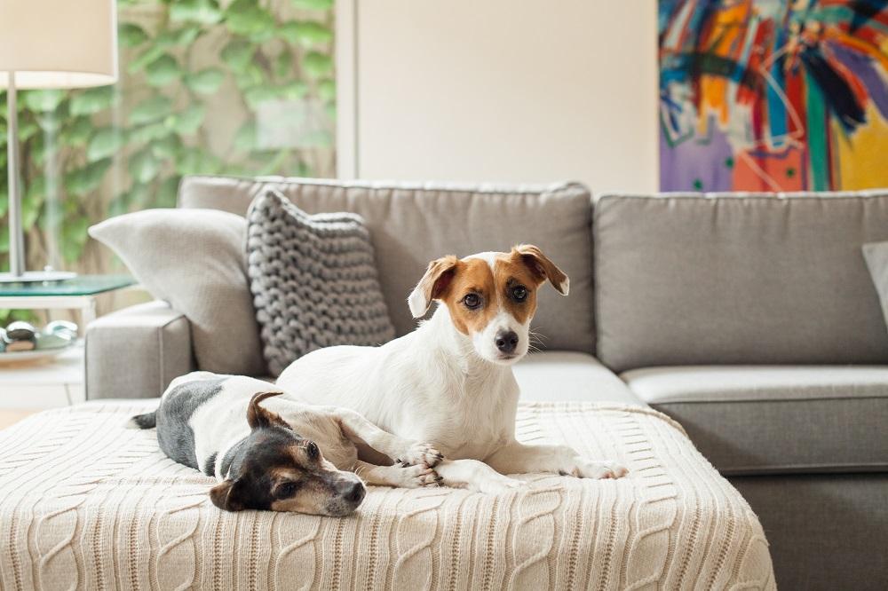 westwing-chris-francini-hunde-auf-sofa