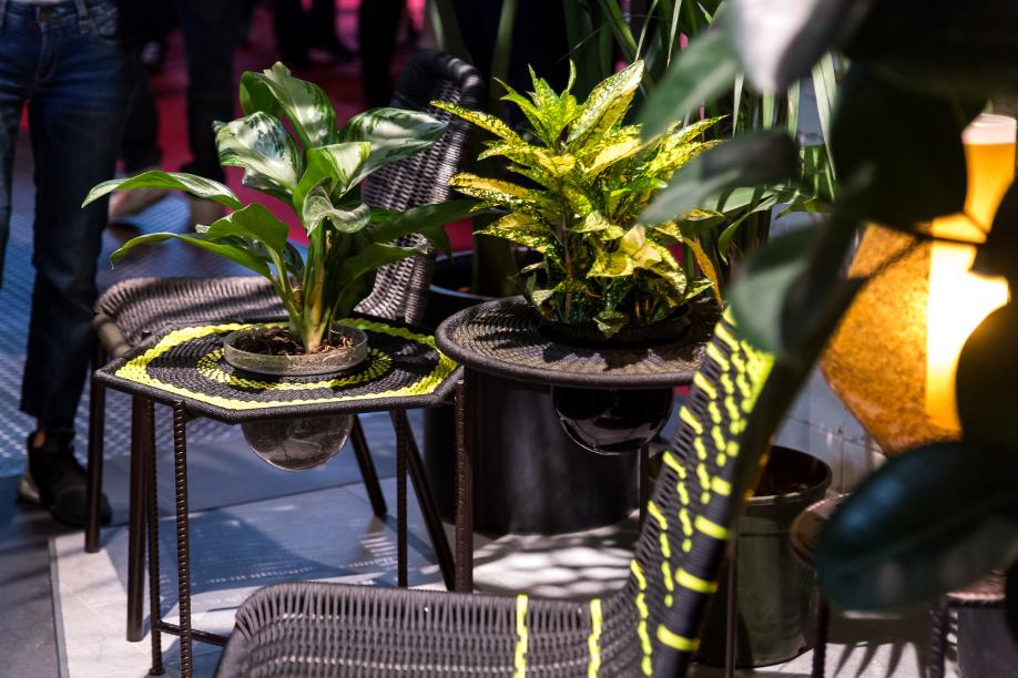 westwing-salone-del-mobile-pflanzen-für-drinnen