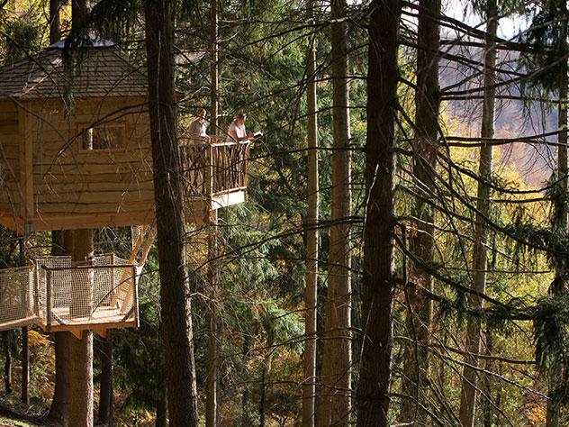 Las Cabañas en los Árboles están construidas entorno al tronco de un árbol