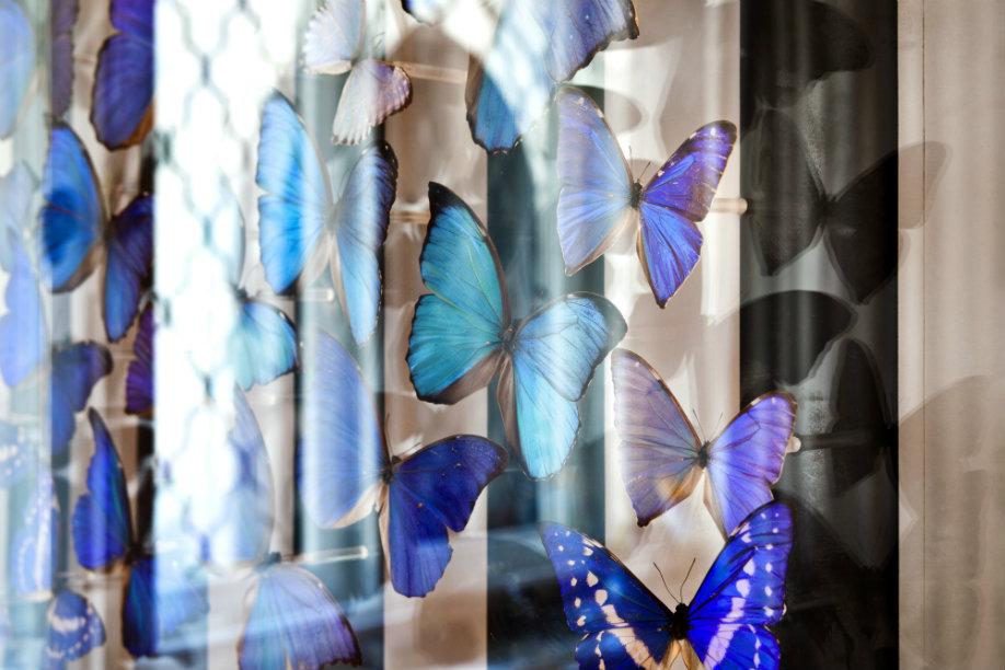 Glamour dinámico mariposas