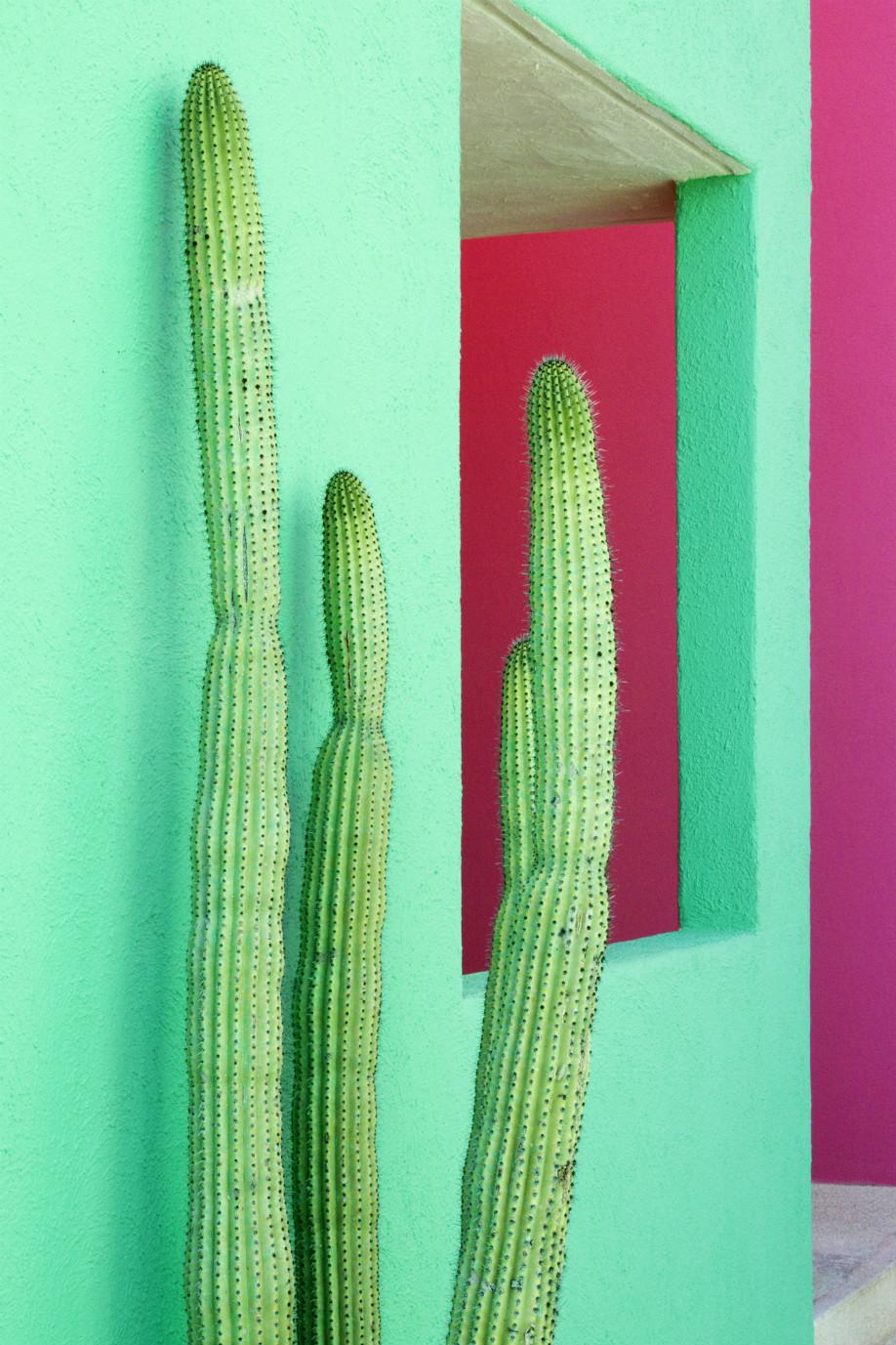 westwing-frida-kahlo-cactus