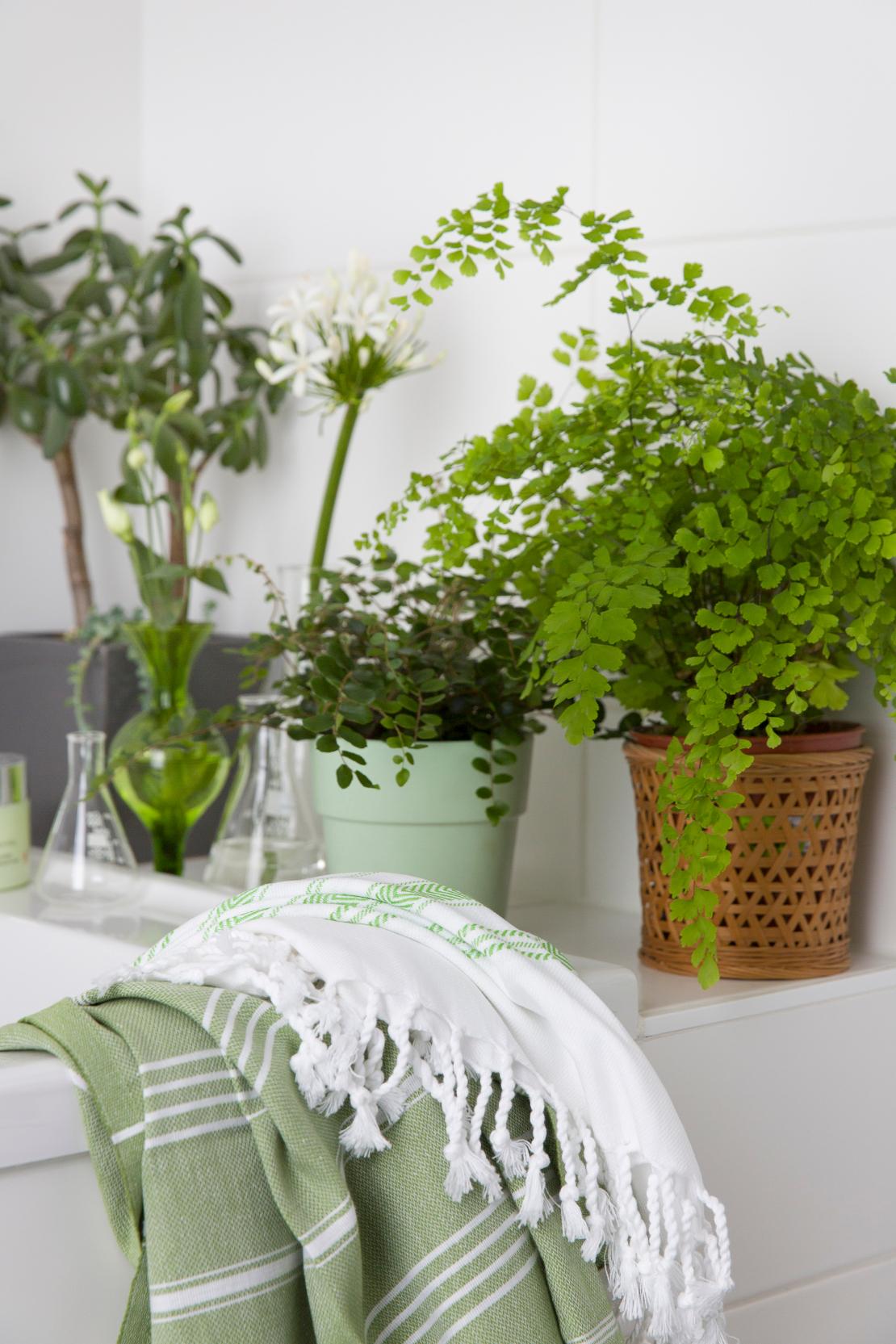 westwing-baños-plantas