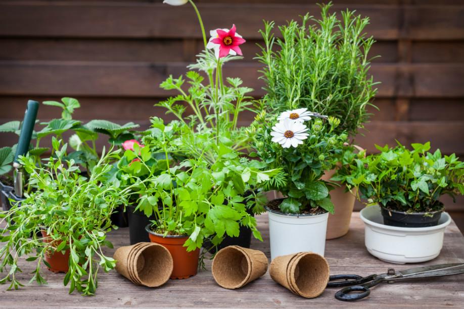 Jardines urbanos plantas aromáticas