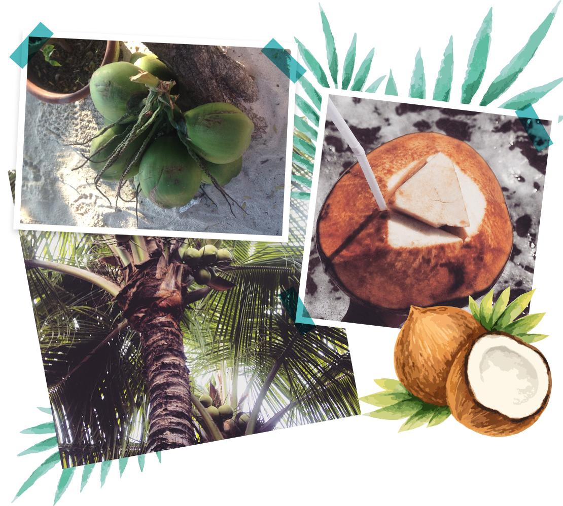 vacaciones en Bali cocos