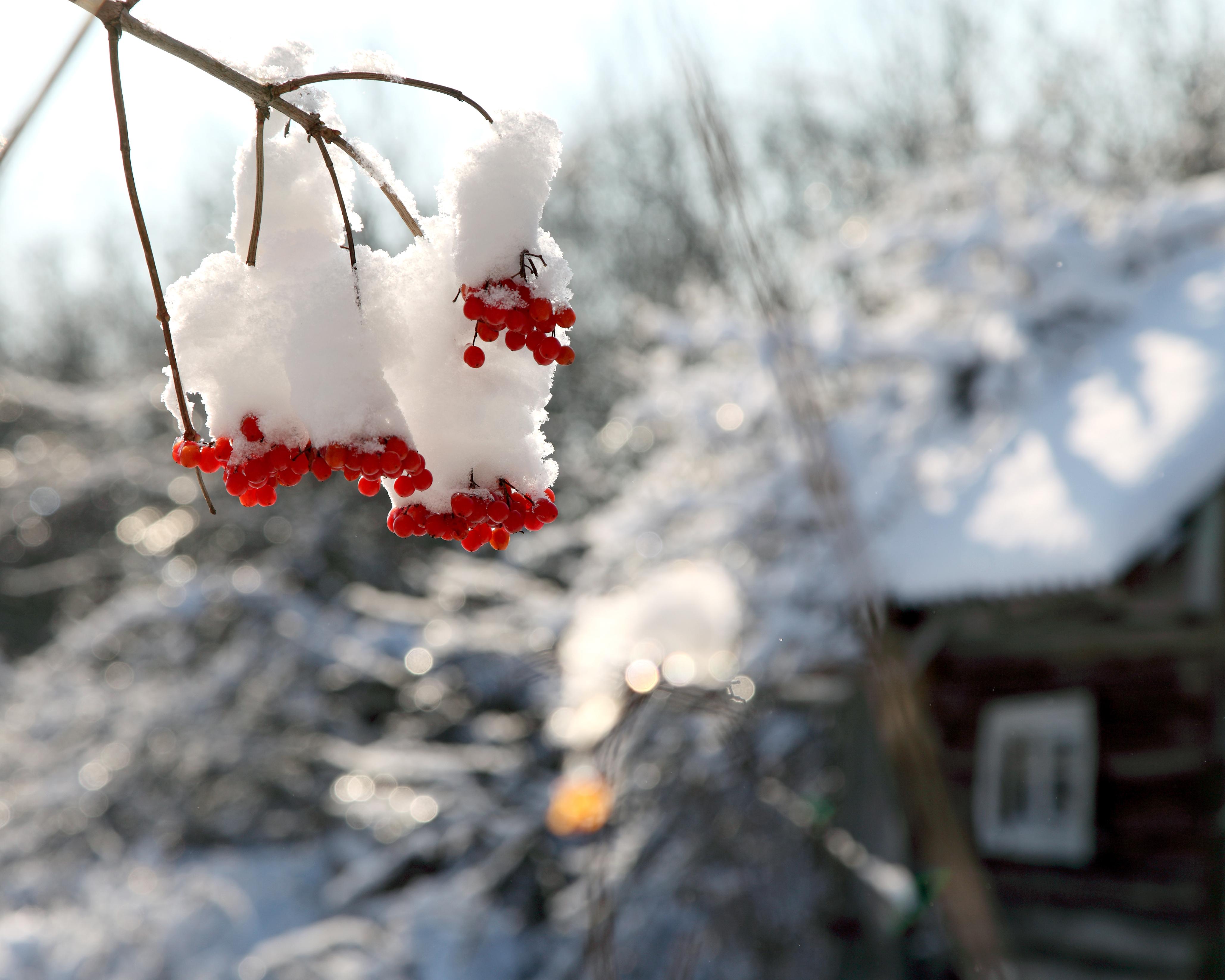 Navidad en las montañas - westwing magazine