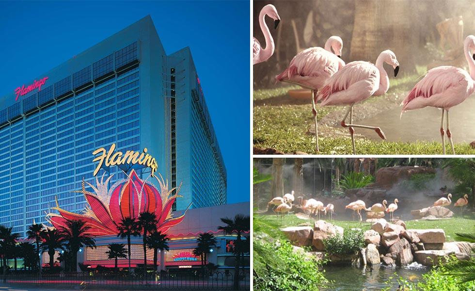 hotel-+flamand-rose