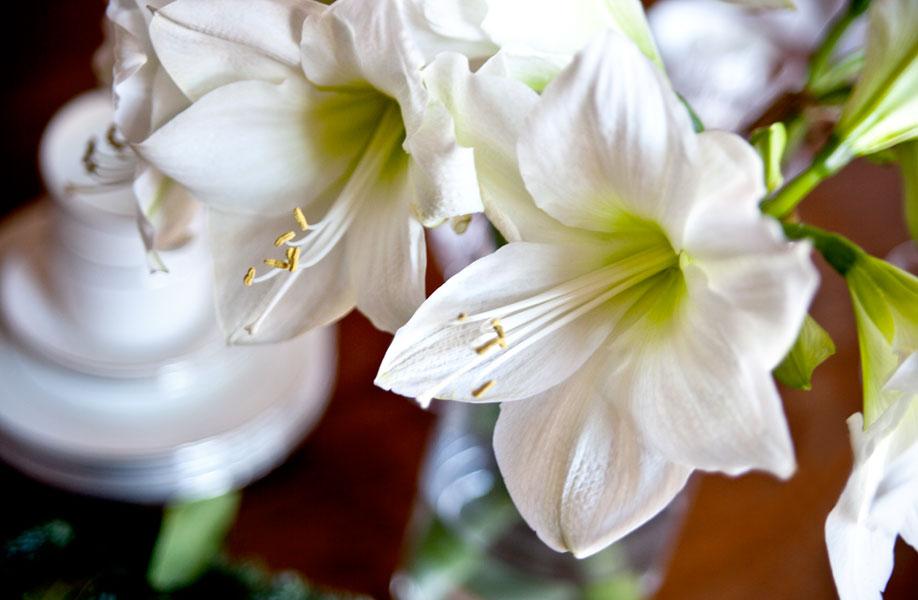 Westwing - Iris
