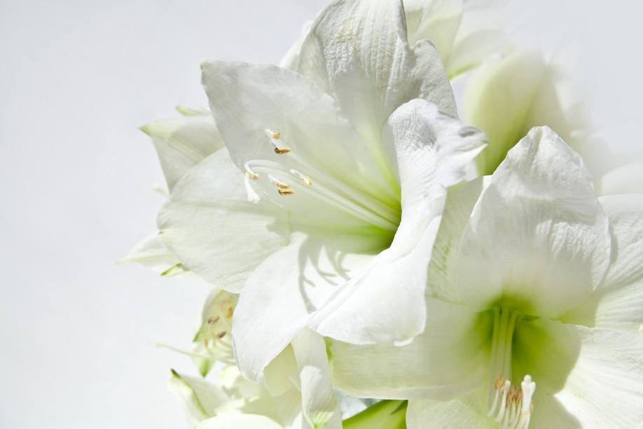 westwing - bouquets d'hiver par Delia Fischer