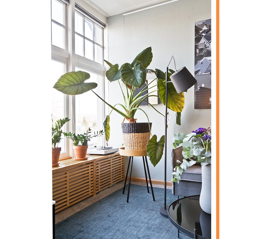 plantes déco verdure intérieur