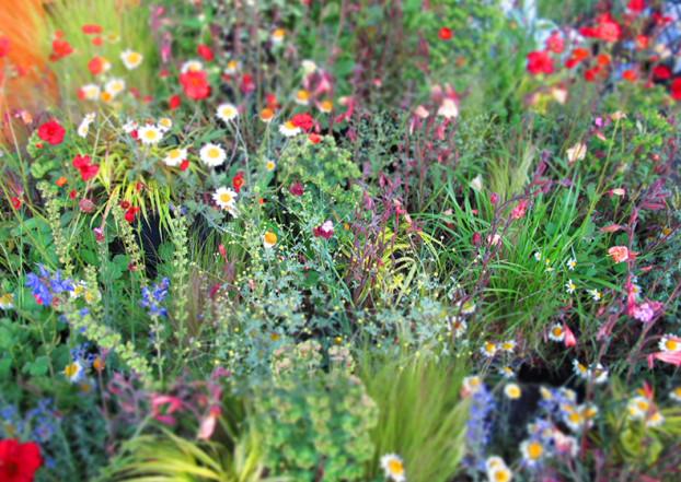 fiori di campo colorati