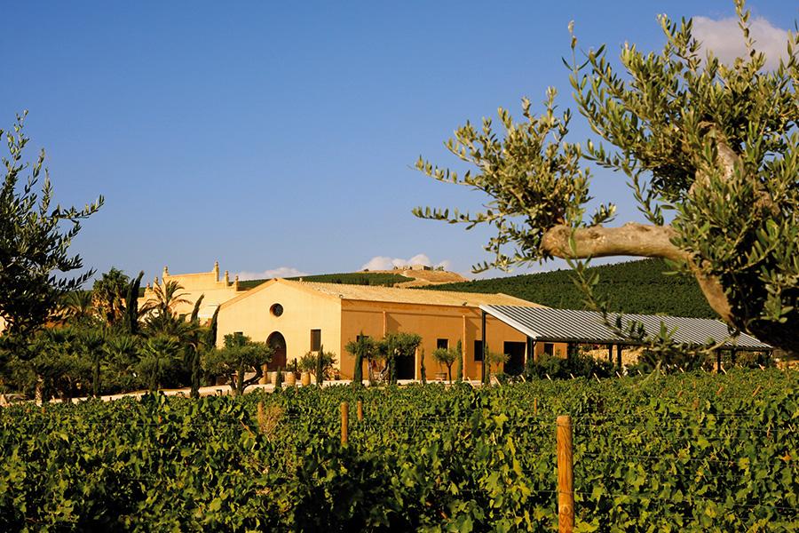 Inverni miti e poco piovosi. Estati calde, secche e ventilate ideali per produrre uve sane. Le forti escursioni termiche estive tra giorno e notte (fino a 20°C) favoriscono la produzione di uve ricche di aromi e perfettamente mature.