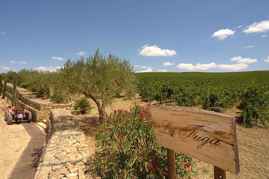 Vino, Dalani, Sicilia, Made-in-Italy, Mediterraneo