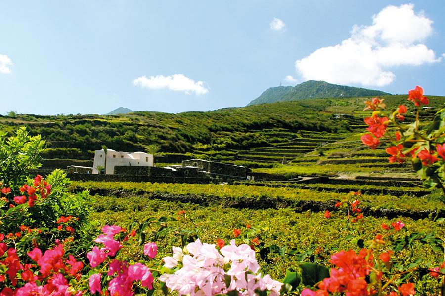 Vino, Sicilia, Sardegna, Made-in-Italy