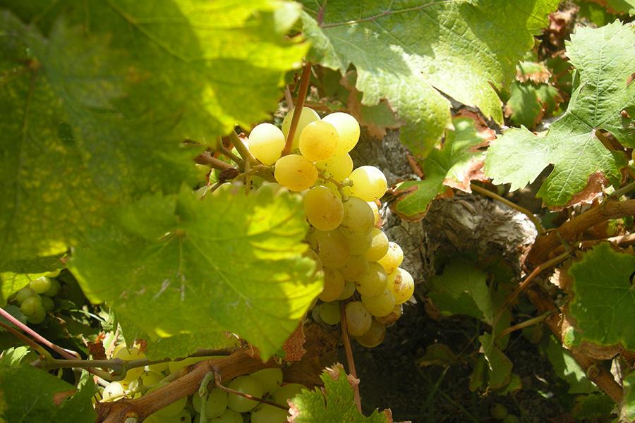 Vino, Sicilia, Made-in-Italy, Mediterraneo, Dalani